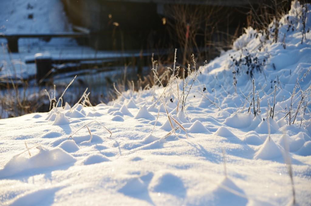 vinterskrud 1